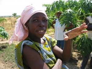 In Mali, farming involves trees, livestock and annual crops, immense diversity as insurance against drought and crop failure - traditional agroforestry systems should be strengthened, not transformed into monoculture.