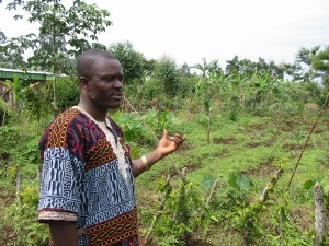 In Cameroon, as elsewhere in Africa, the only insurance family farmers have is diversity of crops, including those they harvest from trees. Monoculture is not a solution to their problems, improved infrastructure and better access to local markets would be.