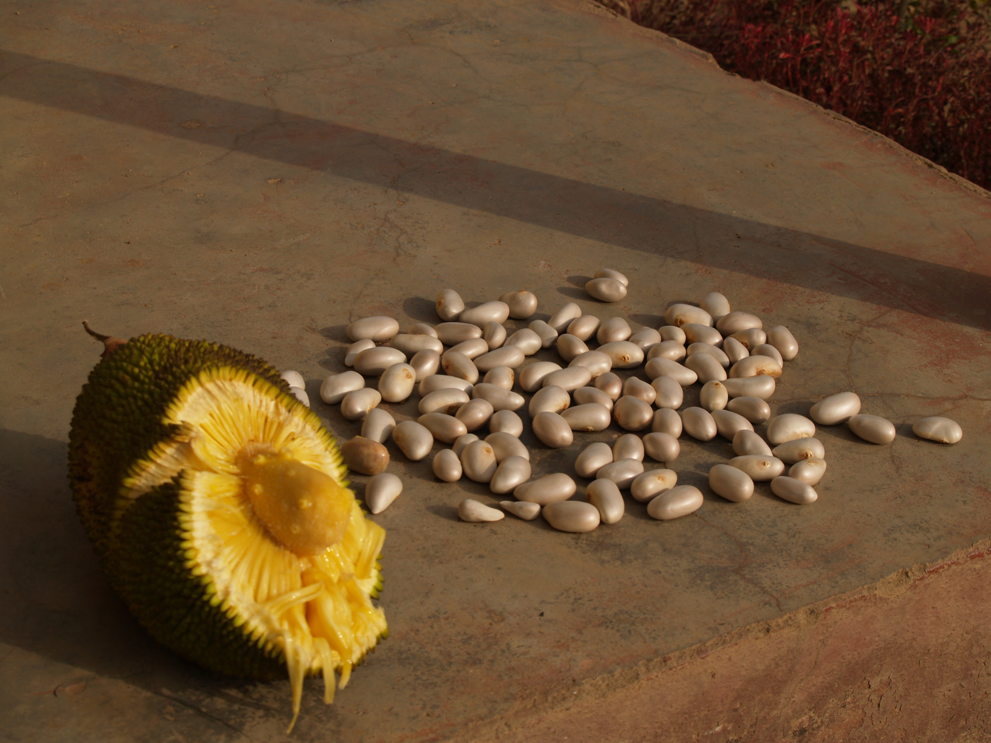 Breadfuit seeds and pulp