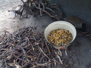 The pods of the locust bean tree produce extremely valuable foods, one a sweet edible yellow powder and the other the seed that is fermented to produce a flavourful and highly nutritious condiment.