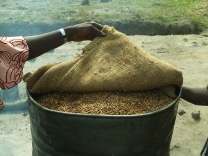 """Parboiling local """"country"""" rice in Sierra Leone"""