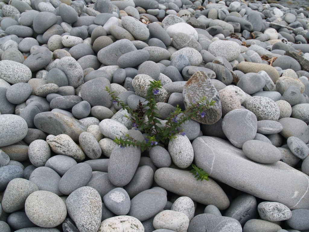 The beautiful worn stones of a Nova Scotia beach, this one in Guysborough County