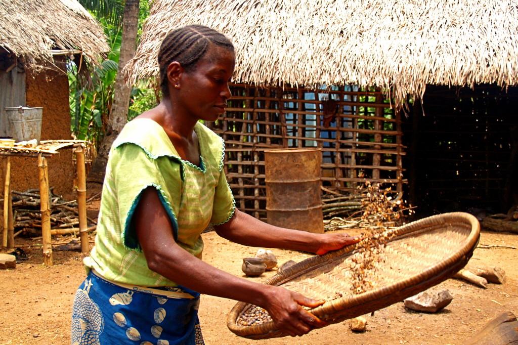 Giewumba Village, Kenema District, separating coffee beans from husks