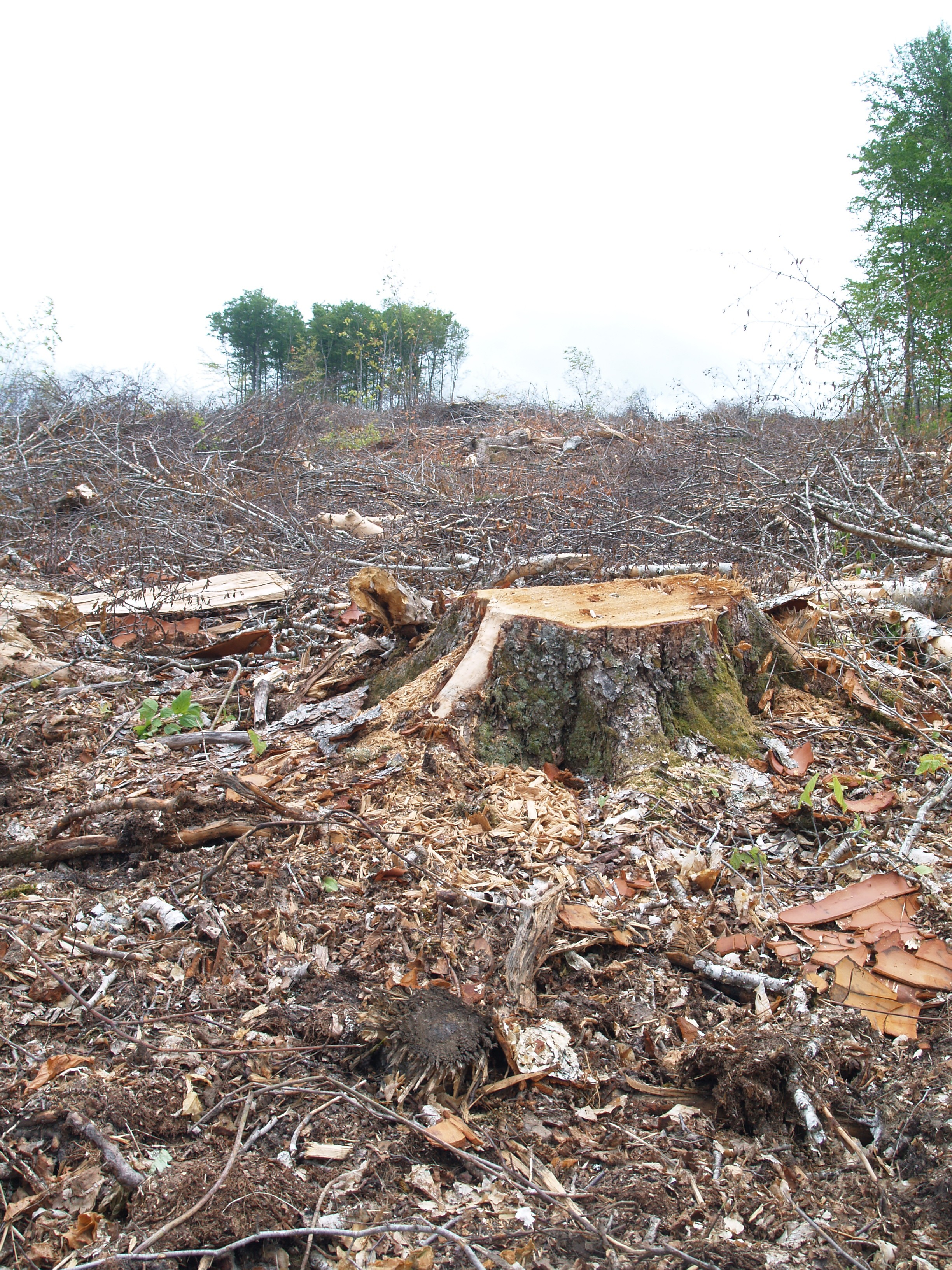 In June 2016, clear cutting began atop one slope in Wentworth Valley on land belonging to Northern Pulp (purchased with a loan from the NS government). Photo by Joan Baxter