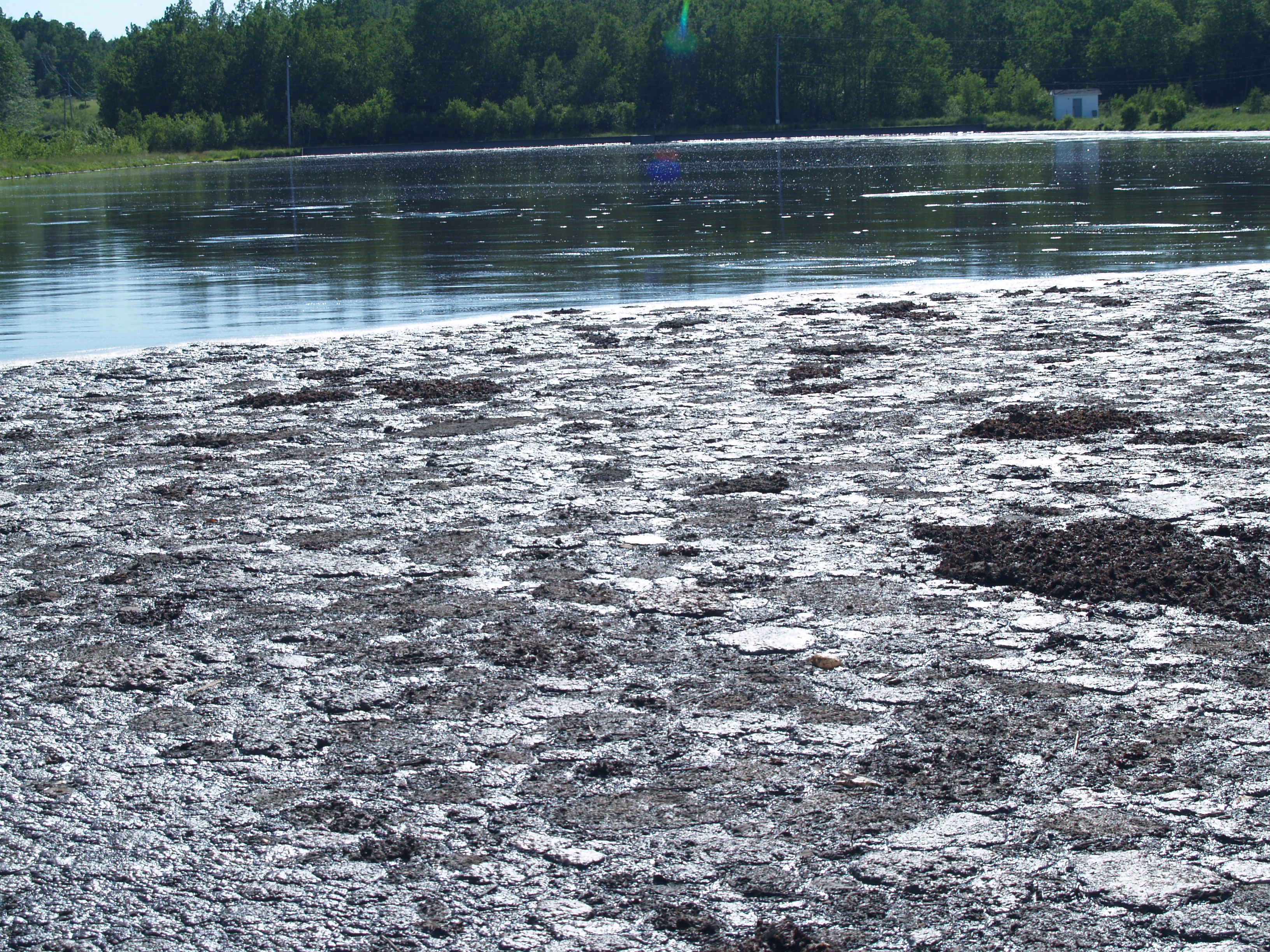 Effluent from the pulp mill in Boat Harbour. Photo by Joan Baxter