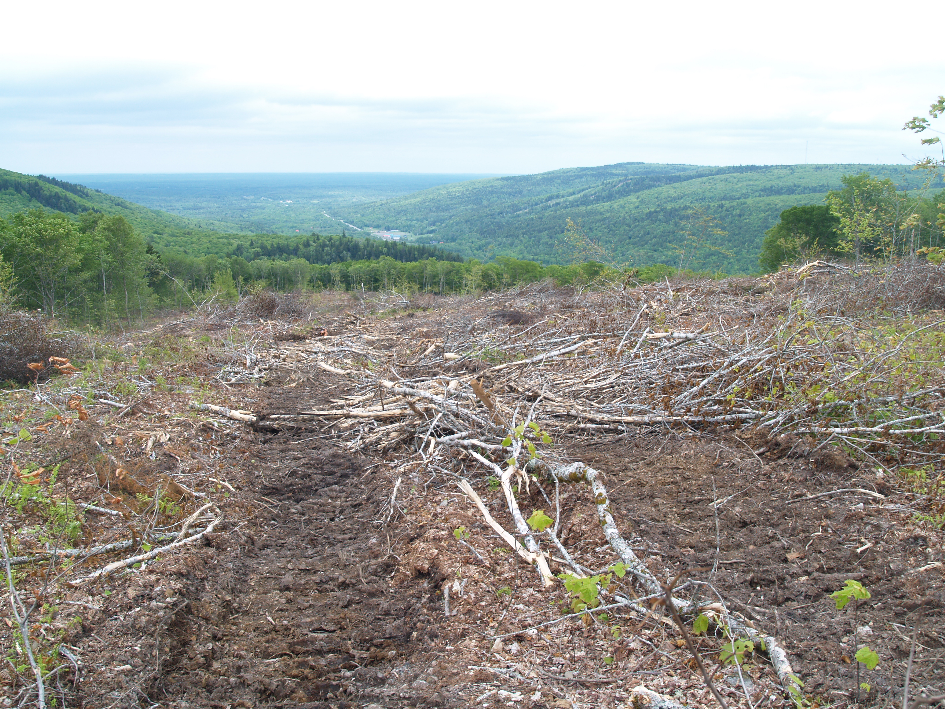 Such clear cutting did not bode well for plans to develop Wentworth Valley into an all-year eco-tourism destination. Photo by Joan Baxter